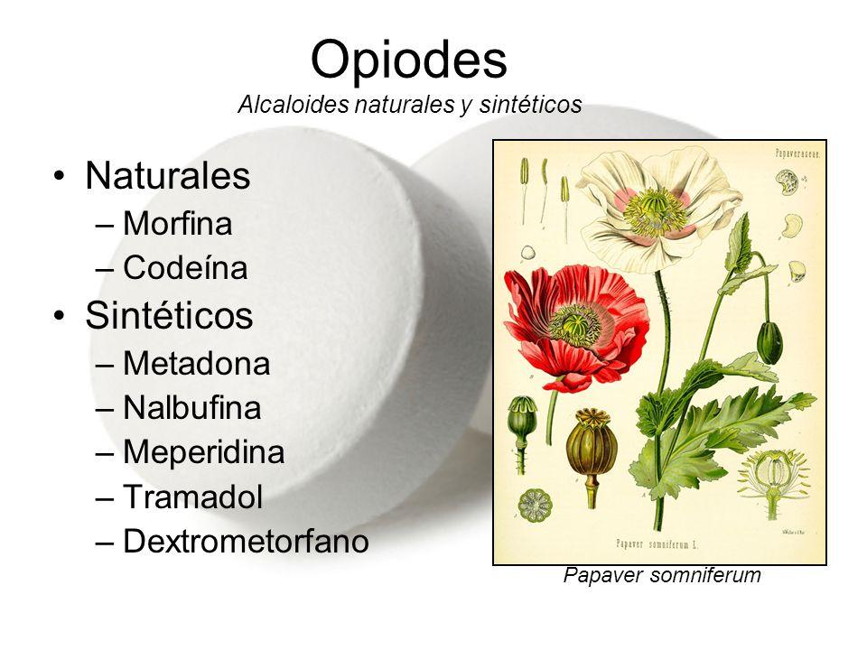Naturales –Morfina –Codeína Sintéticos –Metadona –Nalbufina –Meperidina –Tramadol –Dextrometorfano Opiodes Alcaloides naturales y sintéticos Papaver s