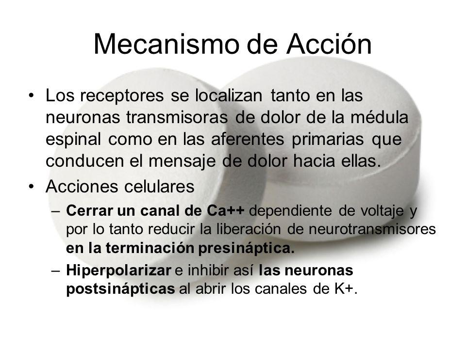 Mecanismo de Acción Los receptores se localizan tanto en las neuronas transmisoras de dolor de la médula espinal como en las aferentes primarias que c