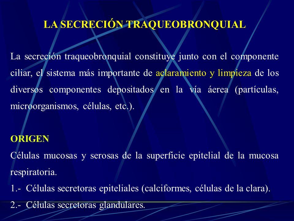 La secreción traqueobronquial constituye junto con el componente ciliar, el sistema más importante de aclaramiento y limpieza de los diversos componen