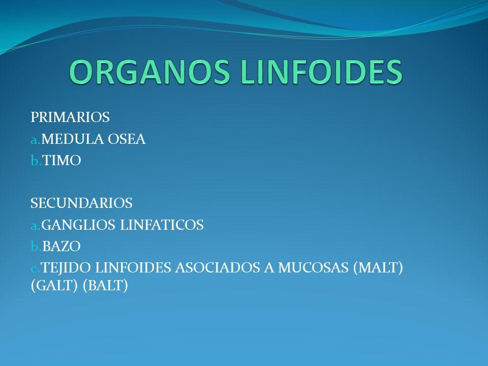 PRIMARIOS a. MEDULA OSEA b. TIMO SECUNDARIOS a. GANGLIOS LINFATICOS b. BAZO c. TEJIDO LINFOIDES ASOCIADOS A MUCOSAS (MALT) (GALT) (BALT)