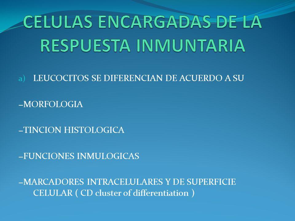 a) LEUCOCITOS SE DIFERENCIAN DE ACUERDO A SU MORFOLOGIA TINCION HISTOLOGICA FUNCIONES INMULOGICAS MARCADORES INTRACELULARES Y DE SUPERFICIE CELULAR (
