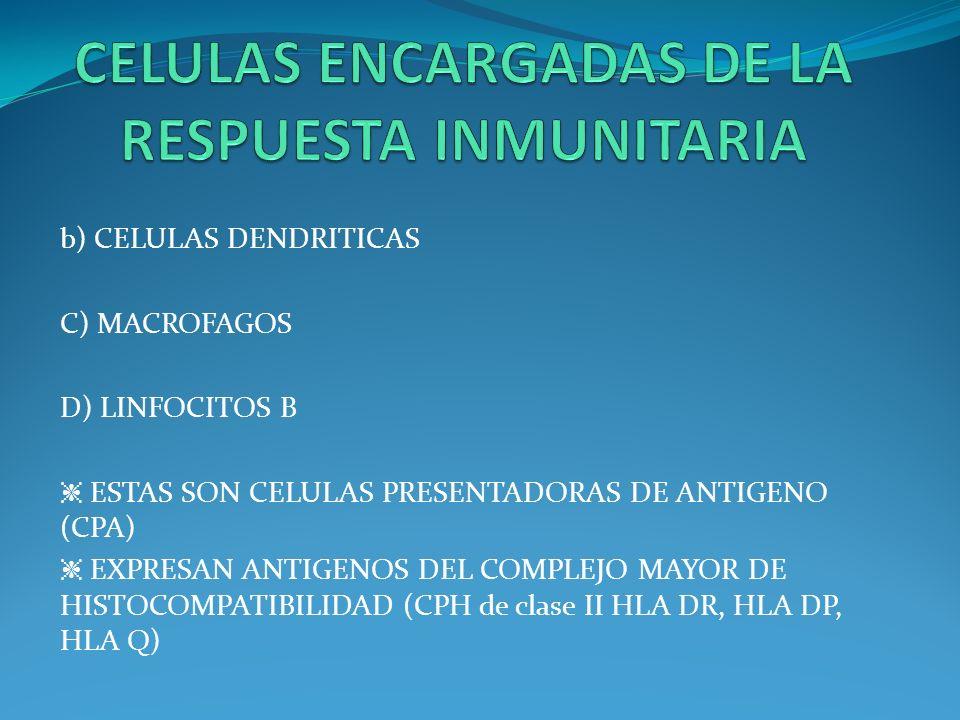 b) CELULAS DENDRITICAS C) MACROFAGOS D) LINFOCITOS B ESTAS SON CELULAS PRESENTADORAS DE ANTIGENO (CPA) EXPRESAN ANTIGENOS DEL COMPLEJO MAYOR DE HISTOC