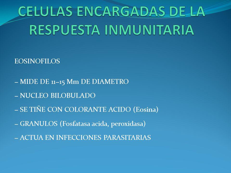 EOSINOFILOS MIDE DE 1115 Mm DE DIAMETRO NUCLEO BILOBULADO SE TIÑE CON COLORANTE ACIDO (Eosina) GRANULOS (Fosfatasa acida, peroxidasa) ACTUA EN INFECCI