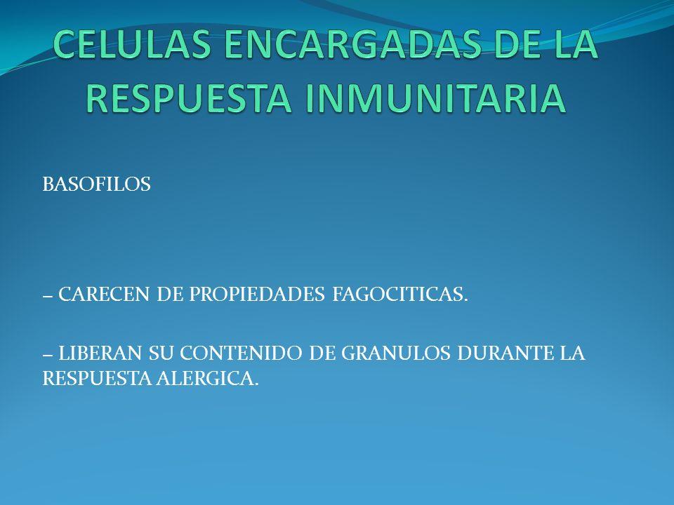 BASOFILOS CARECEN DE PROPIEDADES FAGOCITICAS. LIBERAN SU CONTENIDO DE GRANULOS DURANTE LA RESPUESTA ALERGICA.