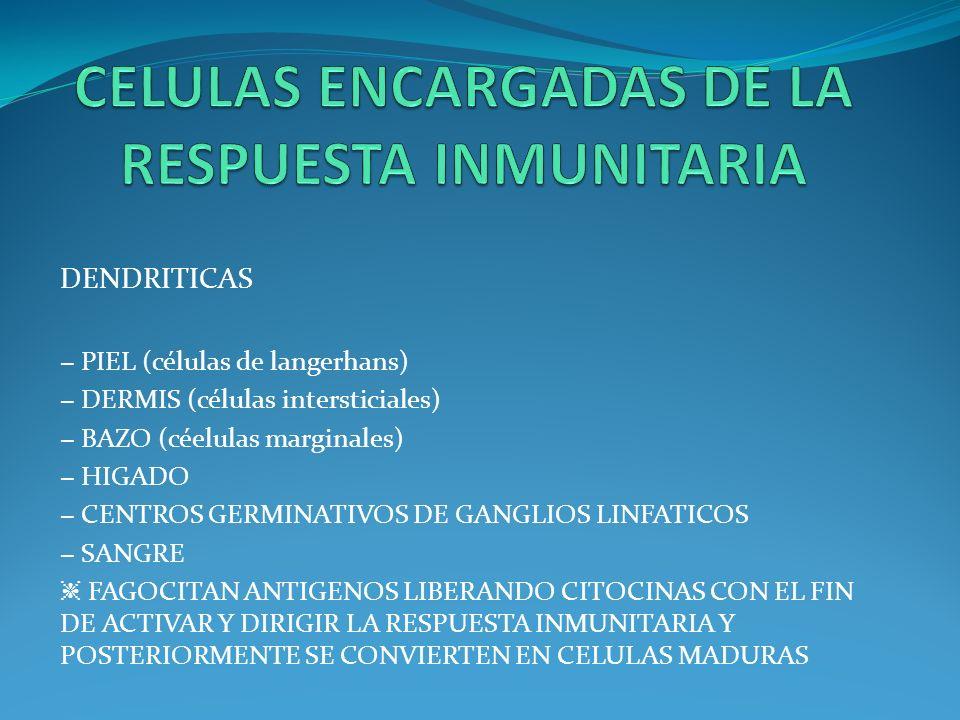 DENDRITICAS PIEL (células de langerhans) DERMIS (células intersticiales) BAZO (céelulas marginales) HIGADO CENTROS GERMINATIVOS DE GANGLIOS LINFATICOS