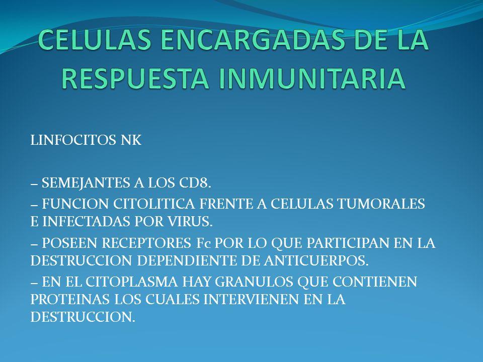 LINFOCITOS NK SEMEJANTES A LOS CD8. FUNCION CITOLITICA FRENTE A CELULAS TUMORALES E INFECTADAS POR VIRUS. POSEEN RECEPTORES Fc POR LO QUE PARTICIPAN E