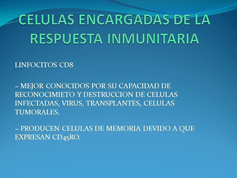 LINFOCITOS CD8 MEJOR CONOCIDOS POR SU CAPACIDAD DE RECONOCIMIETO Y DESTRUCCION DE CELULAS INFECTADAS, VIRUS, TRANSPLANTES, CELULAS TUMORALES. PRODUCEN
