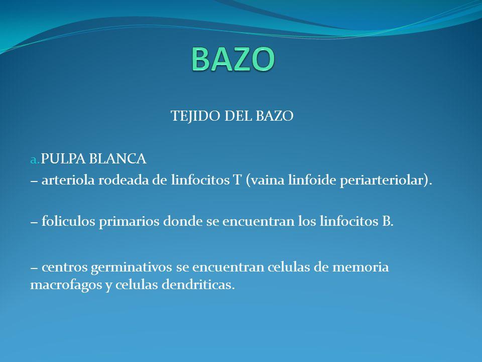 TEJIDO DEL BAZO b. PULPA ROJA Es donde tiene lugar el recambio de plaquetas y de hematies viejos.