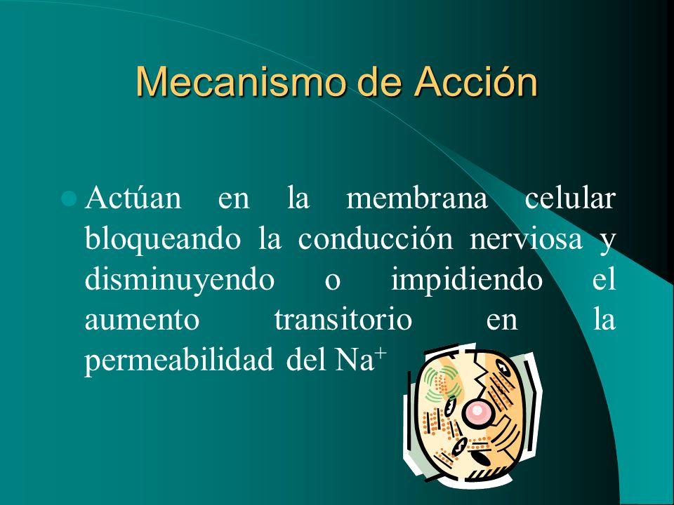 Mecanismo de Acción Actúan en la membrana celular bloqueando la conducción nerviosa y disminuyendo o impidiendo el aumento transitorio en la permeabil