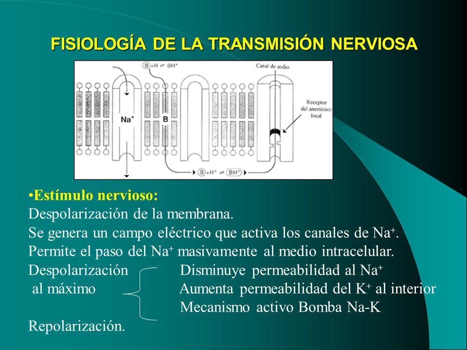 FISIOLOGÍA DE LA TRANSMISIÓN NERVIOSA Estímulo nervioso: Despolarización de la membrana. Se genera un campo eléctrico que activa los canales de Na +.