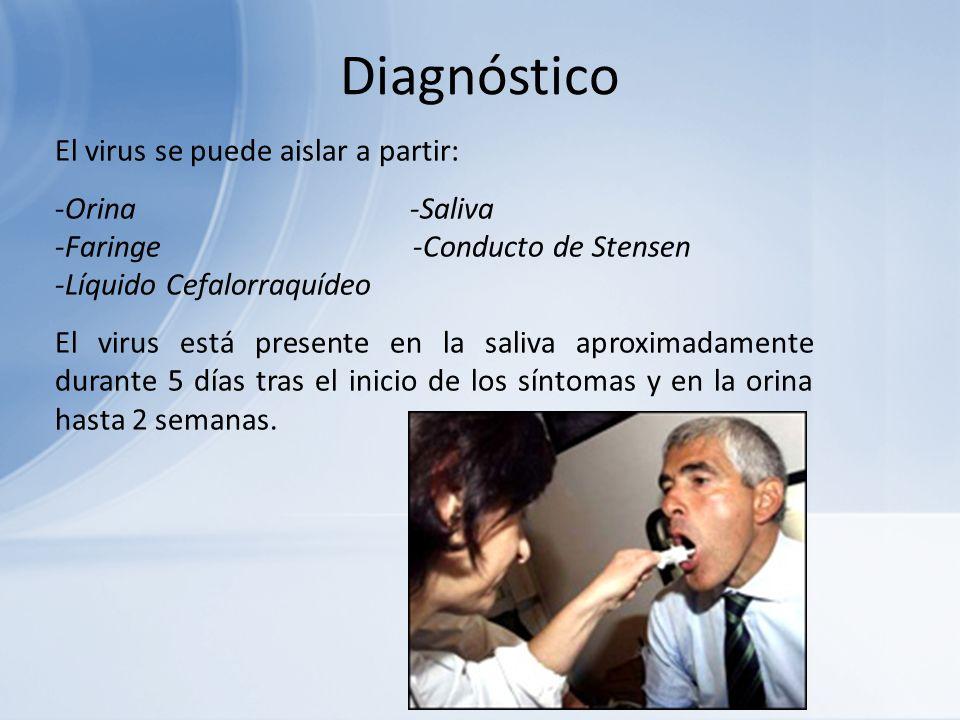 Diagnóstico El virus se puede aislar a partir: -Orina -Saliva -Faringe -Conducto de Stensen -Líquido Cefalorraquídeo El virus está presente en la sali