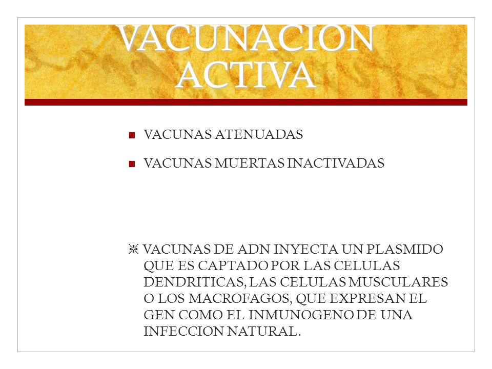 VACUNACION ACTIVA VACUNAS ATENUADAS VACUNAS MUERTAS INACTIVADAS VACUNAS DE ADN INYECTA UN PLASMIDO QUE ES CAPTADO POR LAS CELULAS DENDRITICAS, LAS CEL