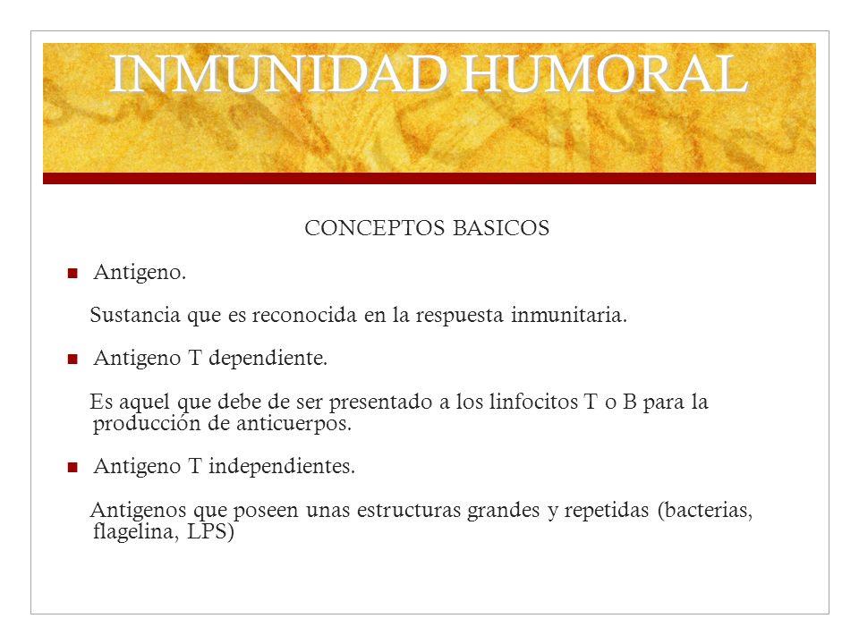 INMUNIDAD HUMORAL CONCEPTOS BASICOS Antigeno. Sustancia que es reconocida en la respuesta inmunitaria. Antigeno T dependiente. Es aquel que debe de se