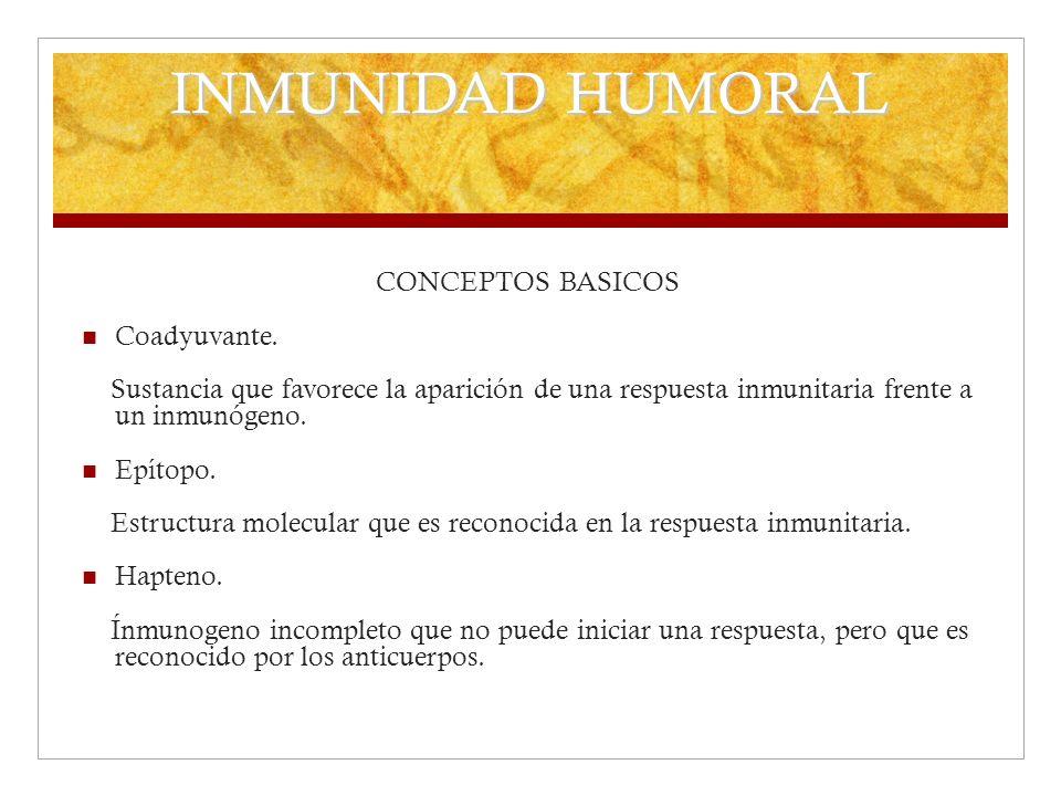 INMUNIDAD HUMORAL CONCEPTOS BASICOS Coadyuvante. Sustancia que favorece la aparición de una respuesta inmunitaria frente a un inmunógeno. Epítopo. Est