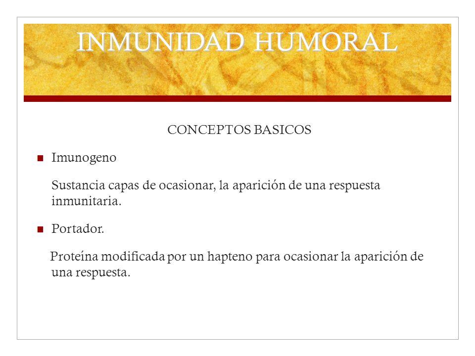 INMUNIDAD HUMORAL CONCEPTOS BASICOS Imunogeno Sustancia capas de ocasionar, la aparición de una respuesta inmunitaria. Portador. Proteína modificada p