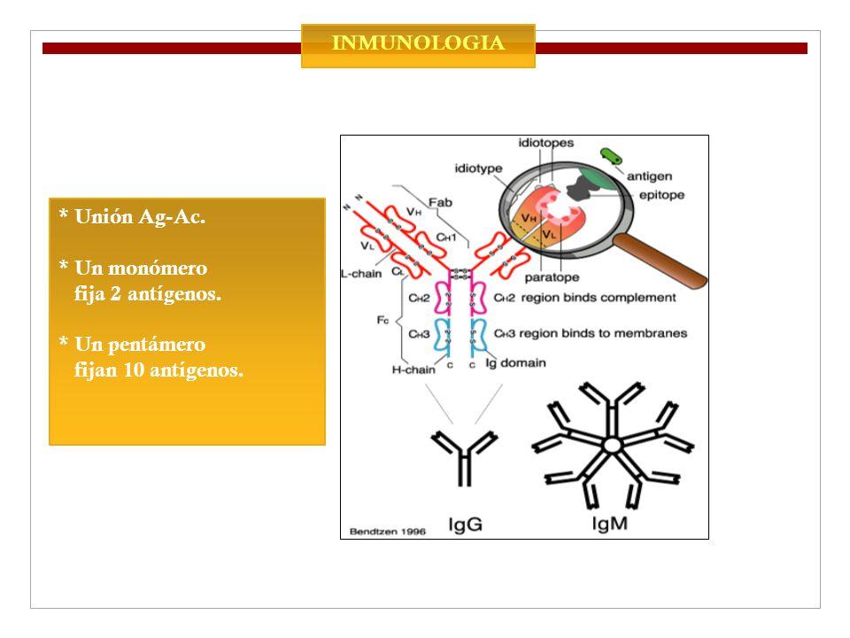 INMUNOLOGIA * Unión Ag-Ac. * Un monómero fija 2 antígenos. * Un pentámero fijan 10 antígenos.