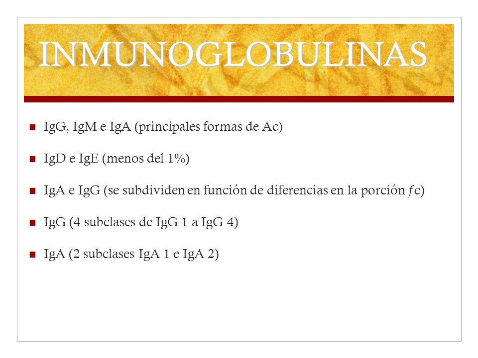 INMUNOGLOBULINAS IgG, IgM e IgA (principales formas de Ac) IgD e IgE (menos del 1%) IgA e IgG (se subdividen en función de diferencias en la porción ƒ