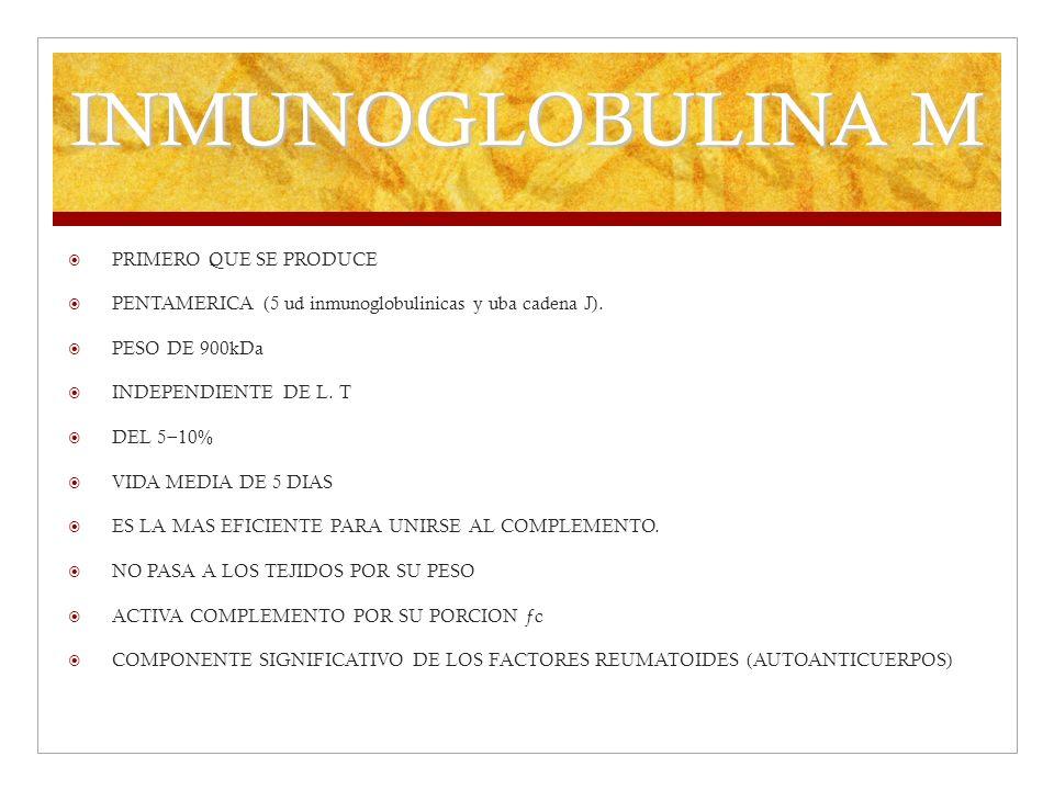 INMUNOGLOBULINA M PRIMERO QUE SE PRODUCE PENTAMERICA (5 ud inmunoglobulinicas y uba cadena J). PESO DE 900kDa INDEPENDIENTE DE L. T DEL 5 10% VIDA MED