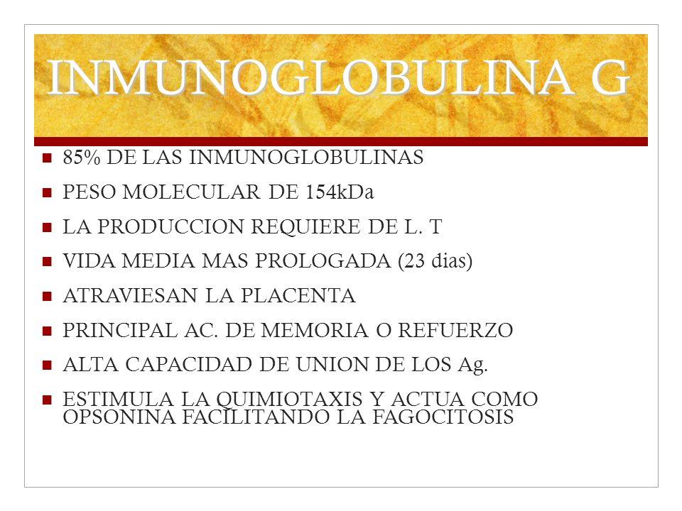 INMUNOGLOBULINA G 85% DE LAS INMUNOGLOBULINAS PESO MOLECULAR DE 154kDa LA PRODUCCION REQUIERE DE L. T VIDA MEDIA MAS PROLOGADA (23 dias) ATRAVIESAN LA
