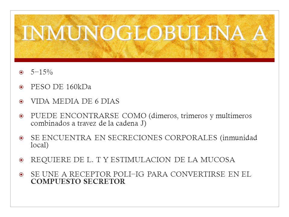 INMUNOGLOBULINA A 5 15% PESO DE 160kDa VIDA MEDIA DE 6 DIAS PUEDE ENCONTRARSE COMO (dimeros, trimeros y multimeros combinados a travez de la cadena J)