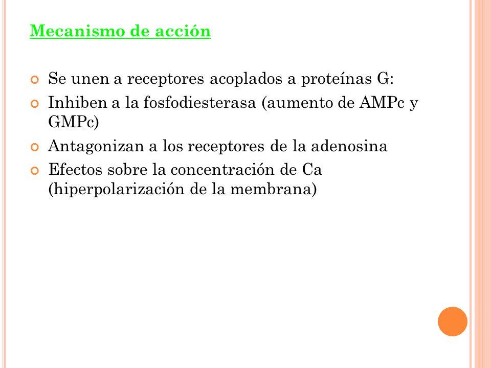 Mecanismo de acción Se unen a receptores acoplados a proteínas G: Inhiben a la fosfodiesterasa (aumento de AMPc y GMPc) Antagonizan a los receptores de la adenosina Efectos sobre la concentración de Ca (hiperpolarización de la membrana)