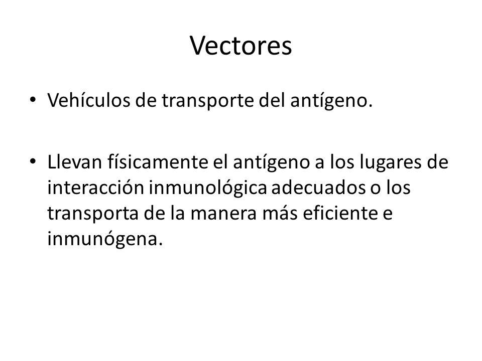 Vectores Vehículos de transporte del antígeno. Llevan físicamente el antígeno a los lugares de interacción inmunológica adecuados o los transporta de