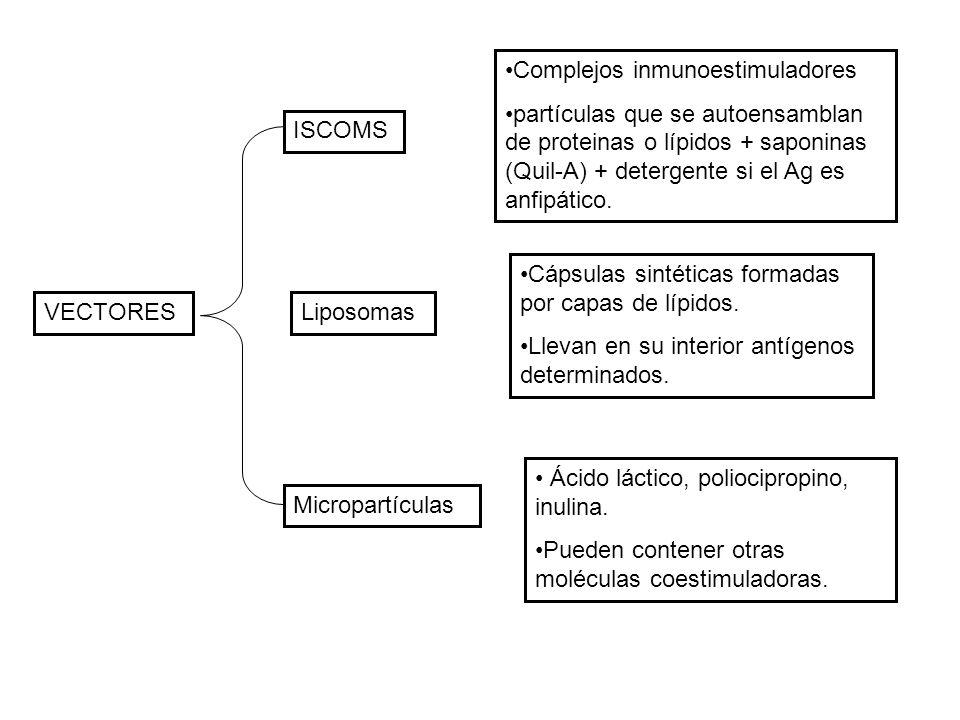 VECTORES ISCOMS Liposomas Micropartículas Complejos inmunoestimuladores partículas que se autoensamblan de proteinas o lípidos + saponinas (Quil-A) +