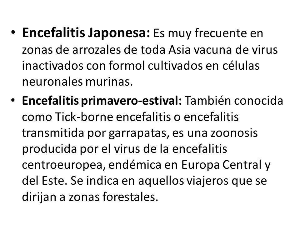 Encefalitis Japonesa: Es muy frecuente en zonas de arrozales de toda Asia vacuna de virus inactivados con formol cultivados en células neuronales muri