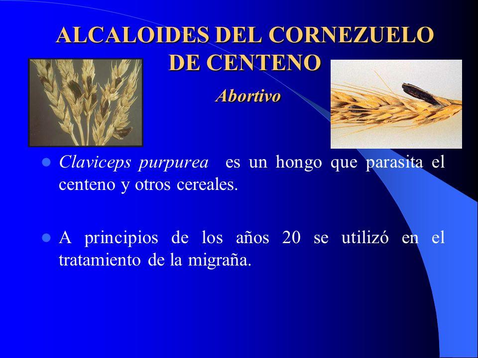 ALCALOIDES DEL CORNEZUELO DE CENTENO Abortivo Claviceps purpurea es un hongo que parasita el centeno y otros cereales. A principios de los años 20 se