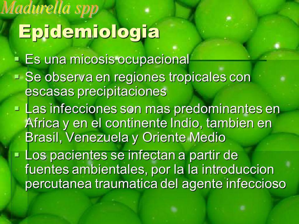Epidemiologia Es una micosis ocupacional Es una micosis ocupacional Se observa en regiones tropicales con escasas precipitaciones Se observa en region