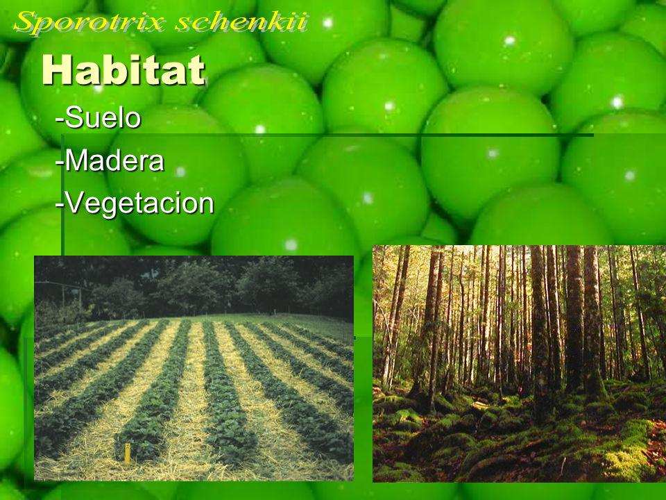 -Suelo -Suelo -Madera -Madera -Vegetacion -Vegetacion Habitat