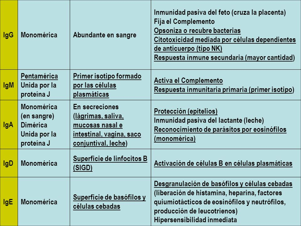 IgGMonoméricaAbundante en sangre Inmunidad pasiva del feto (cruza la placenta) Fija el Complemento Opsoniza o recubre bacterias Citotoxicidad mediada