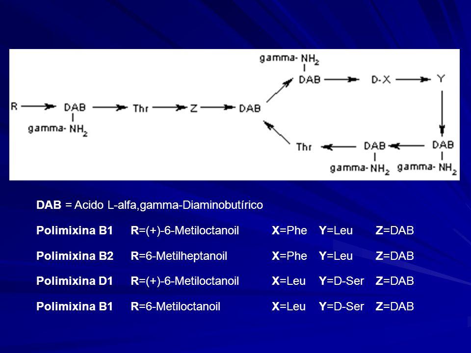 DAB = Acido L-alfa,gamma-Diaminobutírico Polimixina B1R=(+)-6-MetiloctanoilX=PheY=Leu Z=DAB Polimixina B2R=6-MetilheptanoilX=PheY=Leu Z=DAB Polimixina