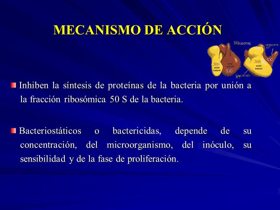 MECANISMO DE ACCIÓN Inhiben la síntesis de proteínas de la bacteria por unión a la fracción ribosómica 50 S de la bacteria. Inhiben la síntesis de pro