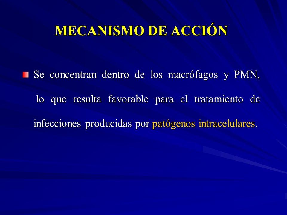 MECANISMO DE ACCIÓN Se concentran dentro de los macrófagos y PMN, lo que resulta favorable para el tratamiento de infecciones producidas por patógenos