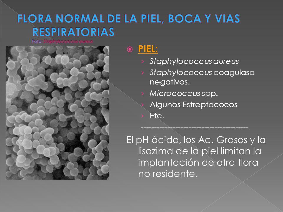 PIEL: Staphylococcus aureus Staphylococcus coagulasa negativos. Micrococcus spp. Algunos Estreptococos Etc. -----------------------------------------