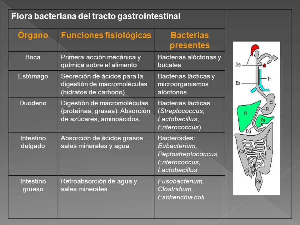 Flora bacteriana del tracto gastrointestinal ÓrganoFunciones fisiológicasBacterias presentes BocaPrimera acción mecánica y química sobre el alimento B