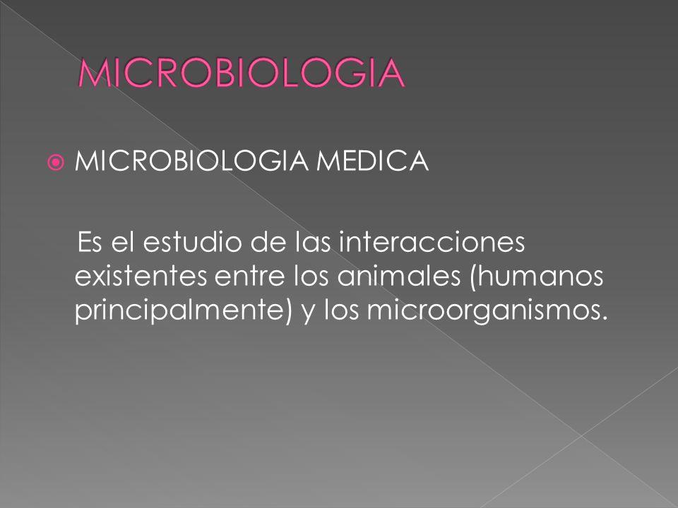 MICROBIOLOGIA MEDICA Es el estudio de las interacciones existentes entre los animales (humanos principalmente) y los microorganismos.