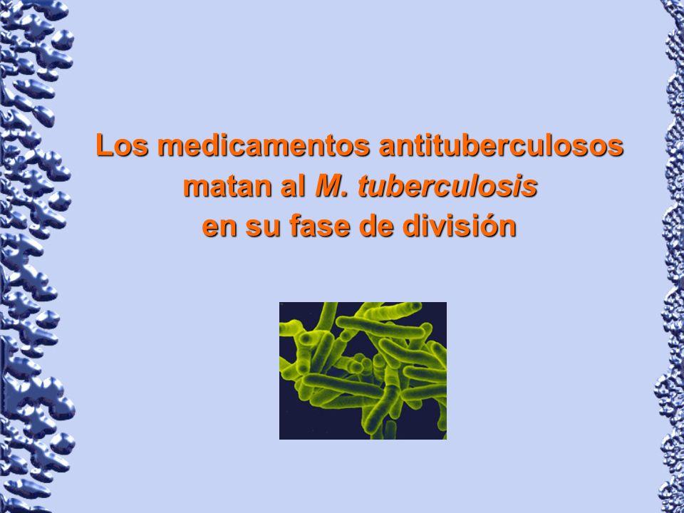 Los medicamentos antituberculosos matan al M. tuberculosis en su fase de división