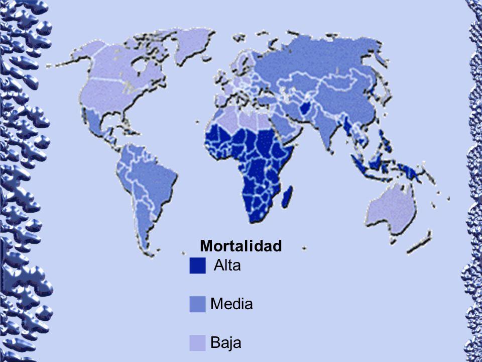 Mortalidad Alta Media Baja