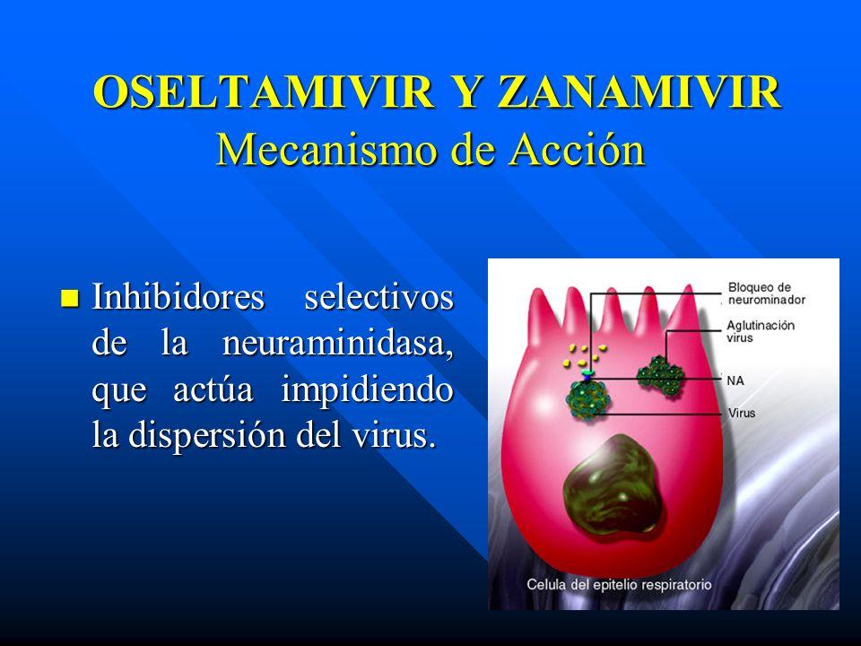 OSELTAMIVIR Y ZANAMIVIR Mecanismo de Acción OSELTAMIVIR Y ZANAMIVIR Mecanismo de Acción Inhibidores selectivos de la neuraminidasa, que actúa impidien