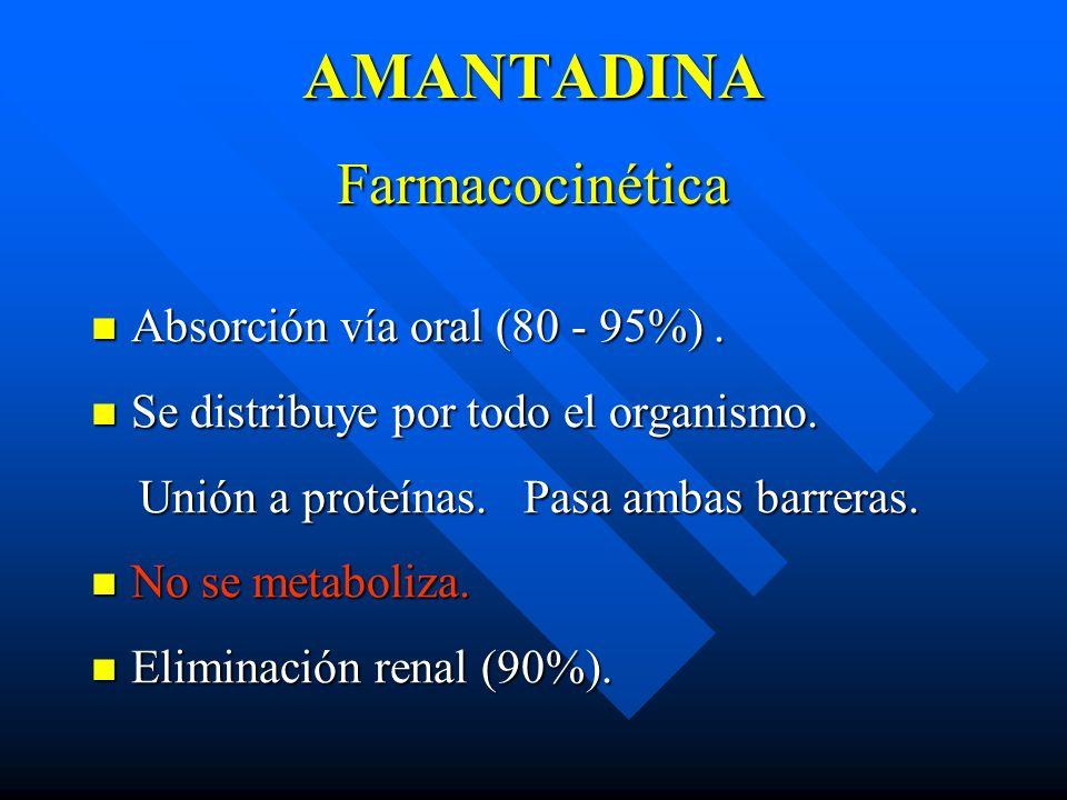 AMANTADINA Farmacocinética Absorción vía oral (80 - 95%). Absorción vía oral (80 - 95%). Se distribuye por todo el organismo. Se distribuye por todo e