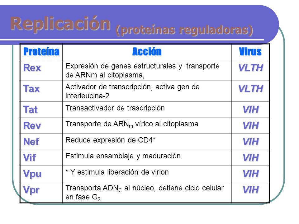 Replicación (proteínas reguladoras) ProteínaAcciónVirus Rex Expresión de genes estructurales y transporte de ARNm al citoplasma,VLTH Tax Activador de