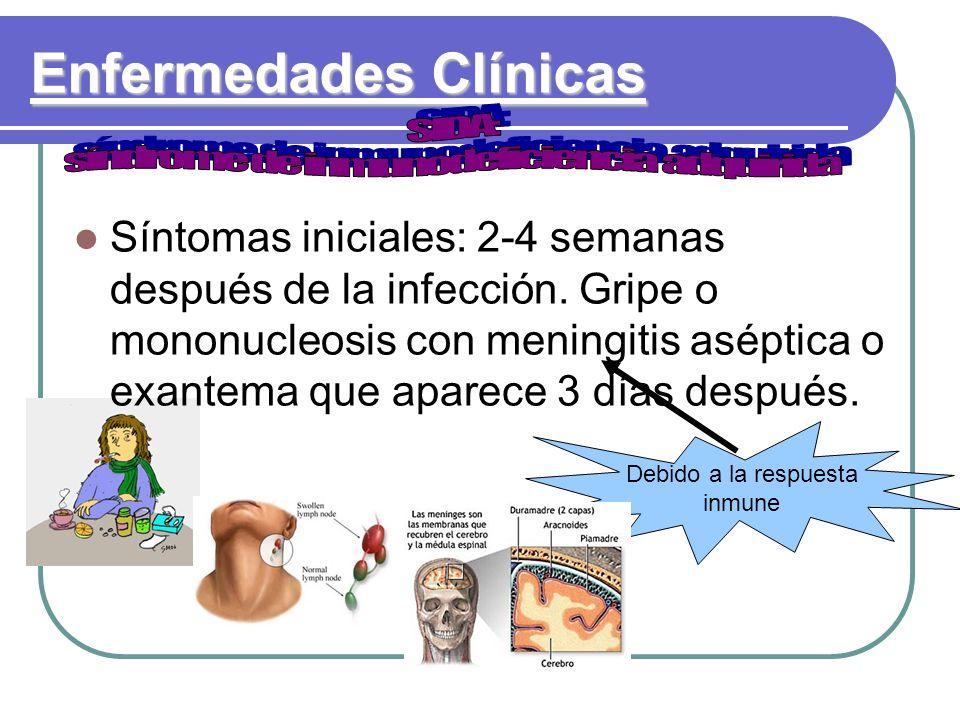 Enfermedades Clínicas Debido a la respuesta inmune Síntomas iniciales: 2-4 semanas después de la infección. Gripe o mononucleosis con meningitis asépt
