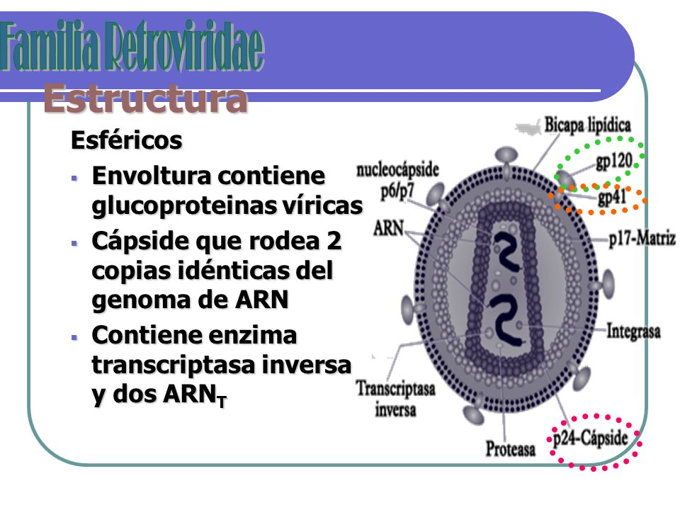 Estructura Esféricos Envoltura contiene glucoproteinas víricas Envoltura contiene glucoproteinas víricas Cápside que rodea 2 copias idénticas del geno