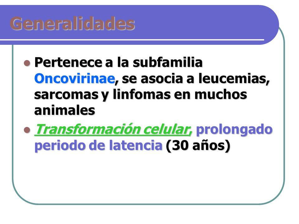 Generalidades Pertenece a la subfamilia Oncovirinae, se asocia a leucemias, sarcomas y linfomas en muchos animales Pertenece a la subfamilia Oncovirin