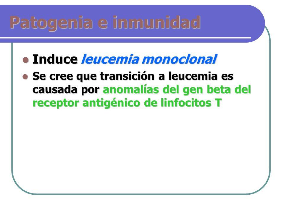 Patogenia e inmunidad Induce leucemia monoclonal Induce leucemia monoclonal Se cree que transición a leucemia es causada por anomalías del gen beta de