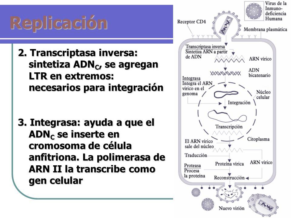 Replicación 2. Transcriptasa inversa: sintetiza ADN C, se agregan LTR en extremos: necesarios para integración 3. Integrasa: ayuda a que el ADN C se i