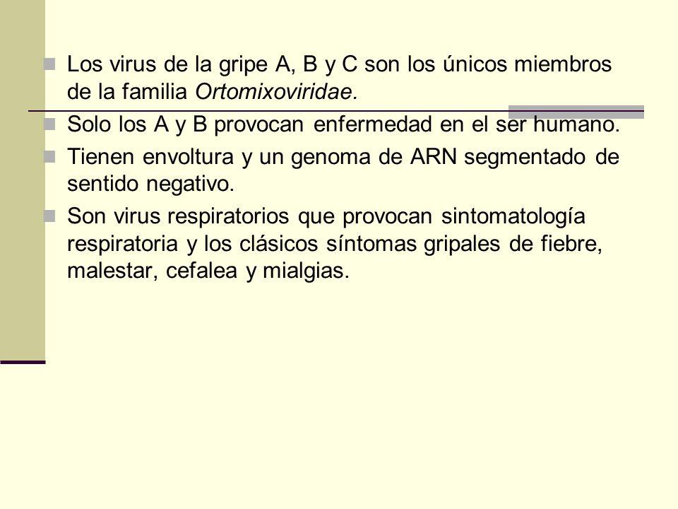 Los virus de la gripe A, B y C son los únicos miembros de la familia Ortomixoviridae. Solo los A y B provocan enfermedad en el ser humano. Tienen envo