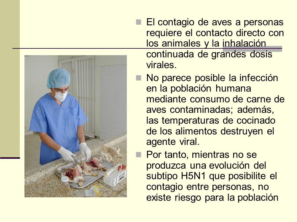 El contagio de aves a personas requiere el contacto directo con los animales y la inhalación continuada de grandes dosis virales. No parece posible la